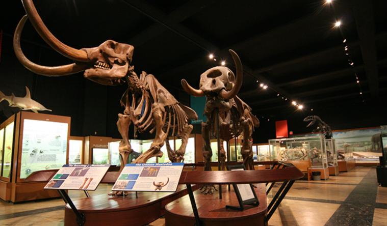 mastodons_UM